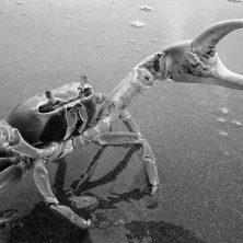 Las especies invasoras son un problema tan grave como el cambio climático